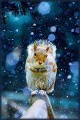 Christmas squirrel jigsaw puzzle