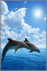Dolphins jumping jigsaw puzzle