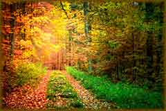 Mobile - PC Fall Europe forest jigsaw puzzle