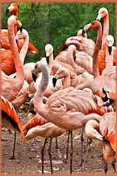 Mobile - PC Group of  Flamingo Group jigsaw puzzle
