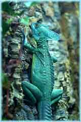 Green chameleon jigsaw puzzle