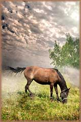 Meadow Horse jigsaw puzzle