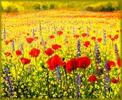 Mobile - PC Poppies Colorful field jigsaw puzzle