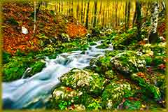 Mobile - PC Group of  alpine wilderness jigsaw puzzle