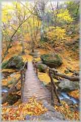 autumn forest bridge jigsaw puzzle