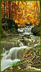 Mobile - PC autumn_forest_mountain_creek jigsaw puzzle