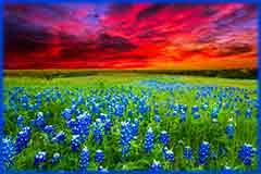 Mobile - PC bluebonnets at sunset jigsaw puzzle
