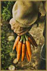 carrots in farmer hand jigsaw puzzle