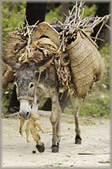 load on burro jigsaw puzzle