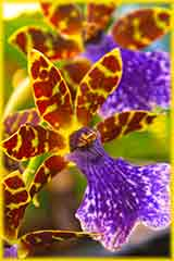 orchid Balboa park jigsaw puzzle