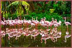Mobile - PC Group of  pink flamingos reflection jigsaw puzzle