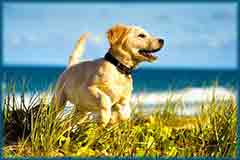 Mobile - PC puppy on beach jigsaw puzzle