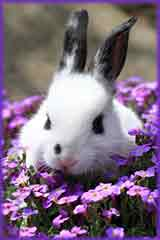 rabbit in violet flowers jigsaw puzzle