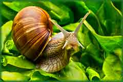 Mobile - PC roman snail jigsaw puzzle