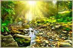 Mobile - PC tranquil forest scene jigsaw puzzle