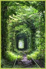 tree tunnel jigsaw puzzle