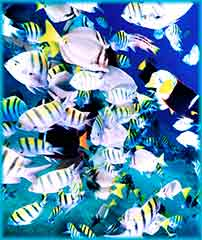 Mobile - PC tropical fish jigsaw puzzle