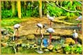 free jigsaw puzzles of Flock of flamingos