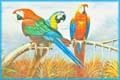 Macaw Parrots Painting