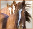 Two Horses jigsaw puzzles