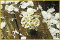 free jigsaw puzzles of daisies bouquet