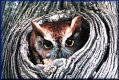 Owl in Tree  jigsaw puzzle